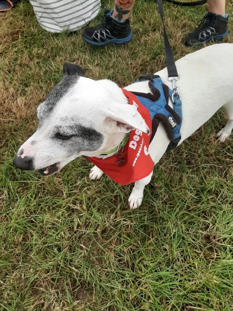 Woofstock welcomes Spanish Stray Dogs UK - Spanish Stray Dogs